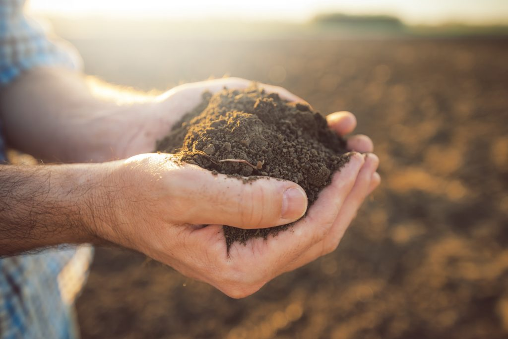 how to get soil tested